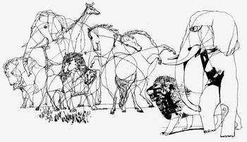 Az állatok teremtése